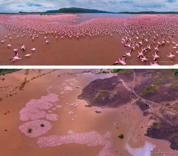 Le Lac Bogoria au Kenya