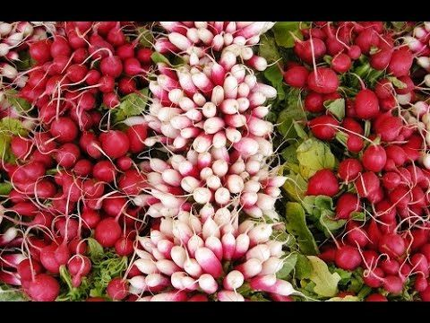 Секреты опытных огородников по выращиванию редиса в открытом грунте