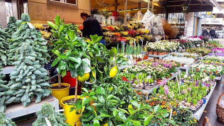 Цветочный магазин в Париже: тут же ёлки  тут же мандариновые деревья (и лимонные)  большой выбор  цветов в горшках как и срезанных - и все это прям на улице!  Рождество уже чувствуется почти везде горит рождественсаая иллюминация  витрины в новогоднем декора.  Кстати магазины начнут работать со след. недели нон-стоп включая воскресенье!  #франция #париж #цветы #flowers #paris #france by dinarasaf