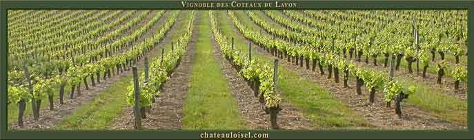 Vignes du Coteau du Layon