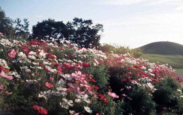 """Sanuki Manno Park is one of those many Japanese parks that you have never heard of and will likely never visit. But, if you do go there, you will find yourself in one of the nation's surprisingly spectacular man-made """"nature"""" parks."""