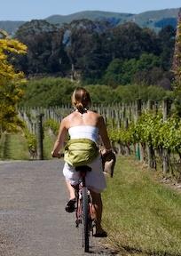 Cycle around Martinborough's wineries.