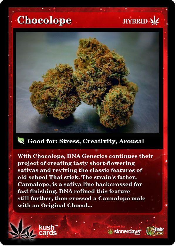 Chocolope   Repined By 5280mosli.com   Organic Cannabis College   Top Shelf Marijuana   High Quality Shatter