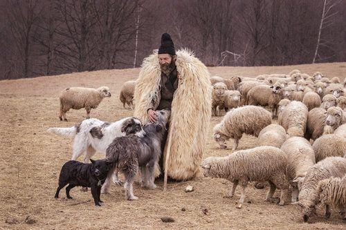 Life at sheepfold by Mirela Savu