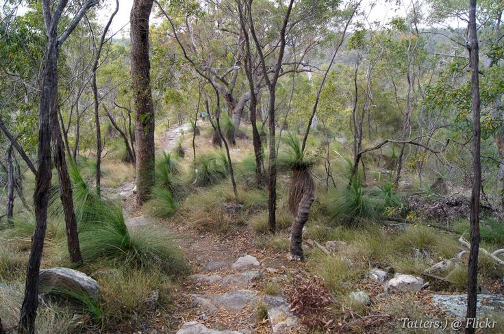 Young growth of grass-trees in Cania GorgeSharing!
