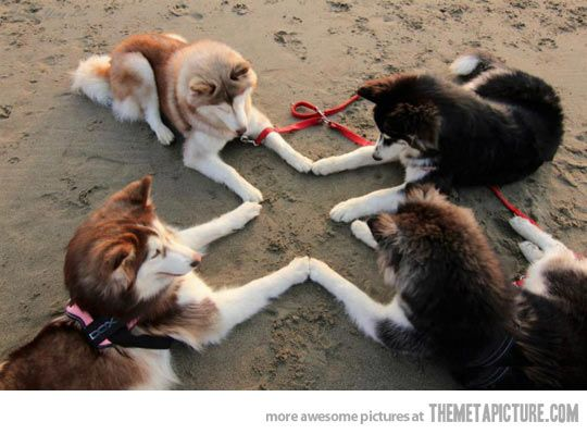 Husky Meeting… - Aquarians love their animals, and can communicate easily and openly with them.