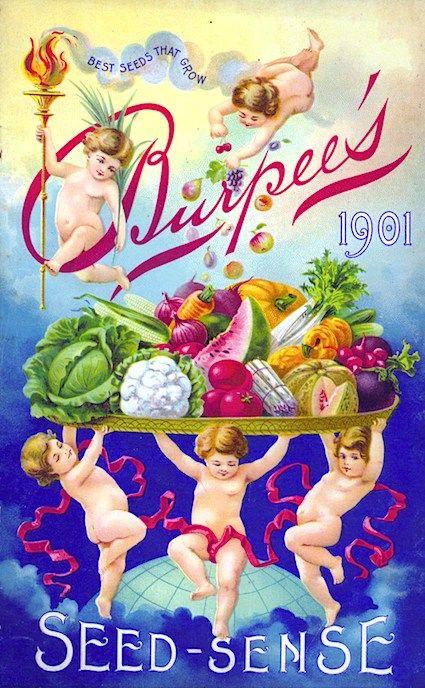1901 Burpee Seed Catalog.
