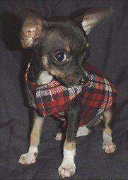Free Resizable Dog Clothing Pattern