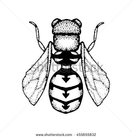 Vector image of #wasp. Hand drawn by ink, black and white color. #pointillism