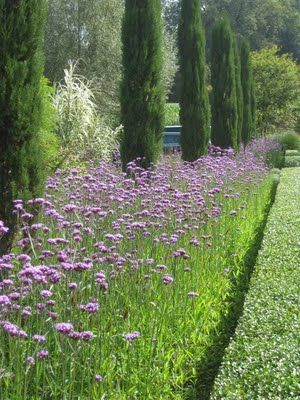 verbena bonarensis as edging along both sides of a driveway - plus great blog about gardens in Europe.