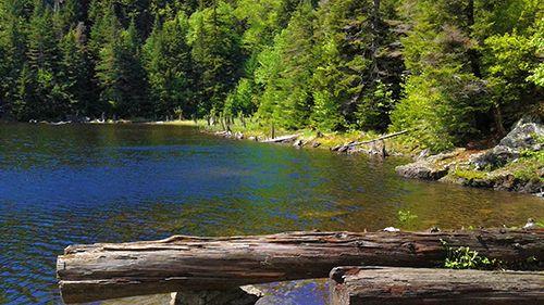 Presque l'été. Lac Spruce Crédit photo : M.-C. Grégoire