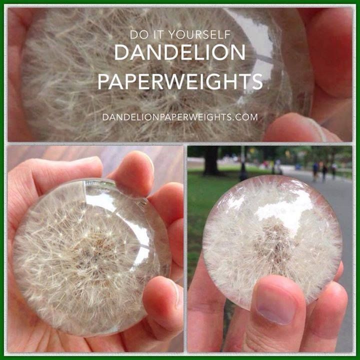 How to Make a Dandelion Paperweight from Kirby J on Vimeo. This should work with any dried flower. The resin dye (CASTIN CRAFT Casting Epoxy Resin Opaque Blue Pigment Dye), should come with directi…
