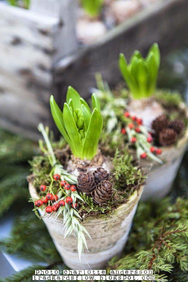 Trädgårdsflow: 1:a adventsöppet i garden flow shop