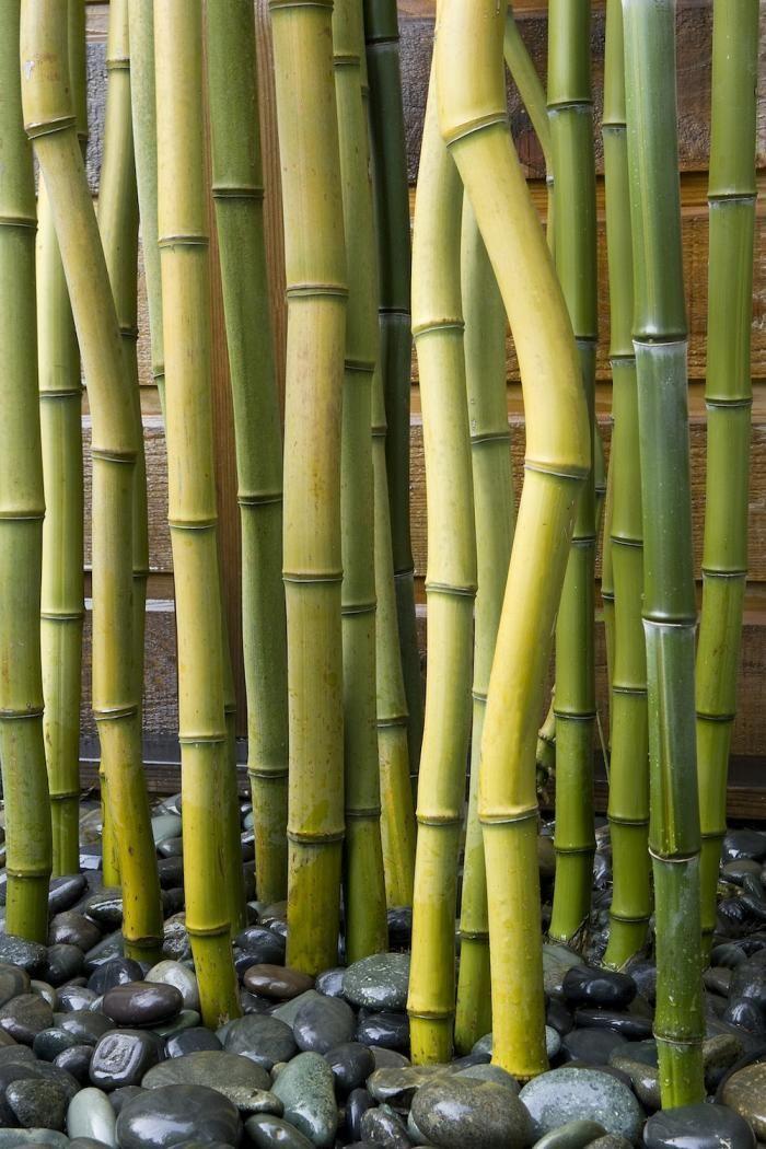 A Jewel Box Townhouse Garden   Bambu, Folhas e Imagens