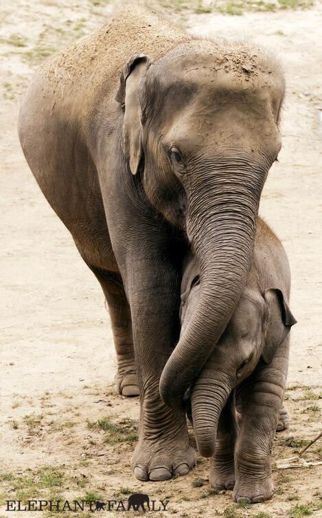 Elephant Family #HappyAlert via @Happy Hippo Billy