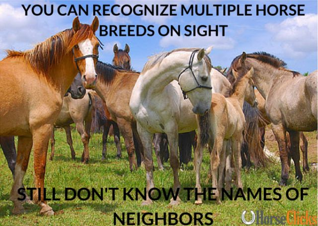 Recognizing horse breeds on sight but still not knowing the names of the neighbors... lol! #Funny #Horse #Meme