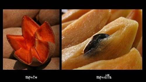 Frutti sconosciuti: sapote e sapodilla
