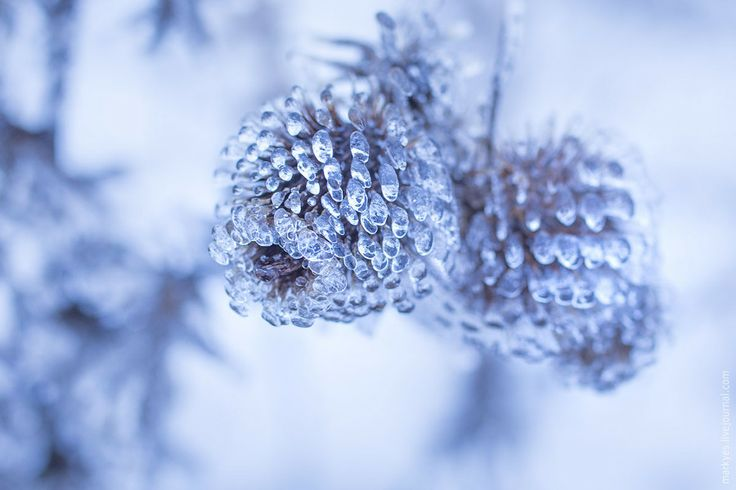 Winter thorn by Mark Sivak on 500px