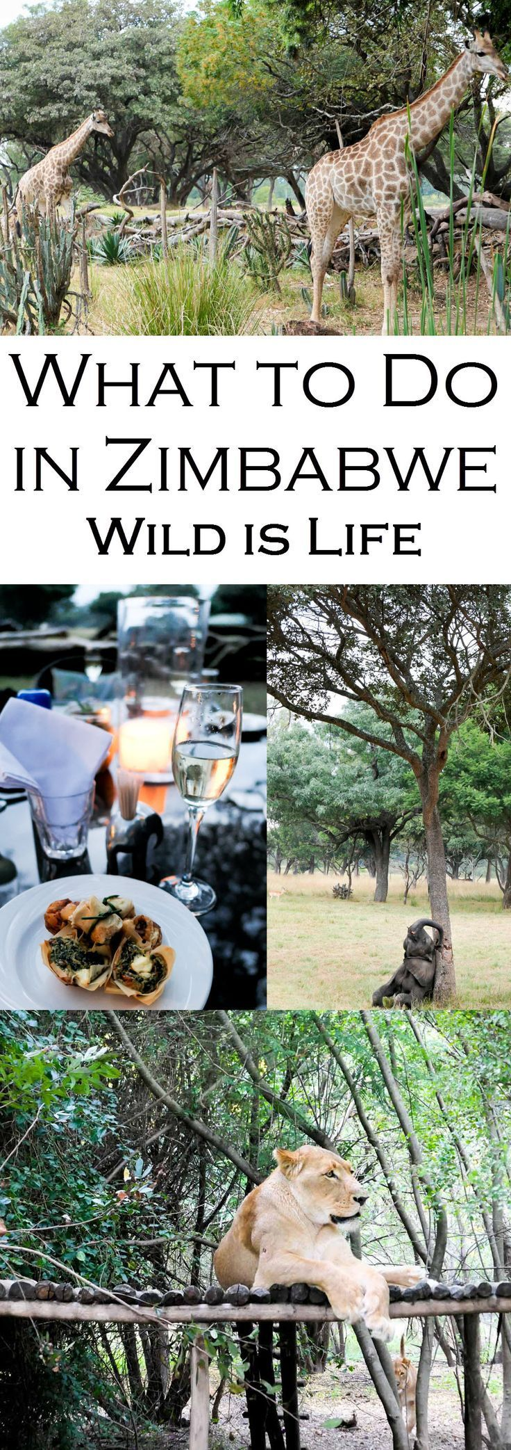 Wondering What to do in Harare, Zimbabwe? Visit Wild is Life an animal conservancy working to return injured animals to the wild. Enjoy feeding giraffes, baby elephants, and afternoon tea and coffee. End the afternoon with champagne and canapes for sundowners!