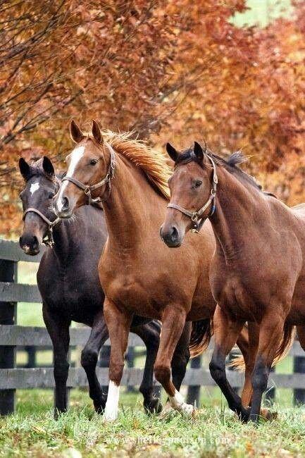 Horses in autumn's beauty
