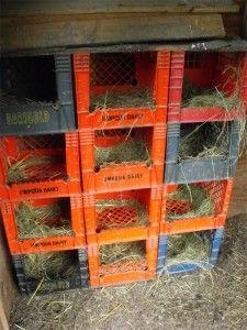Nest Boxes Made of Plastic Milk Crates