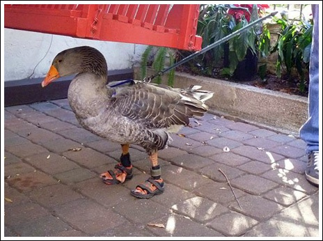 17 Best Images About Animals With Shoes Cute On