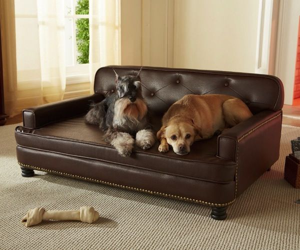Get this pet #sofa #bed, and you'll soon go green with envy as your pets ignore you and lounge around all day on the rich faux #leather. - http://thegadgetflow.com/portfolio/enchanted-home-pet-sofa-bed/