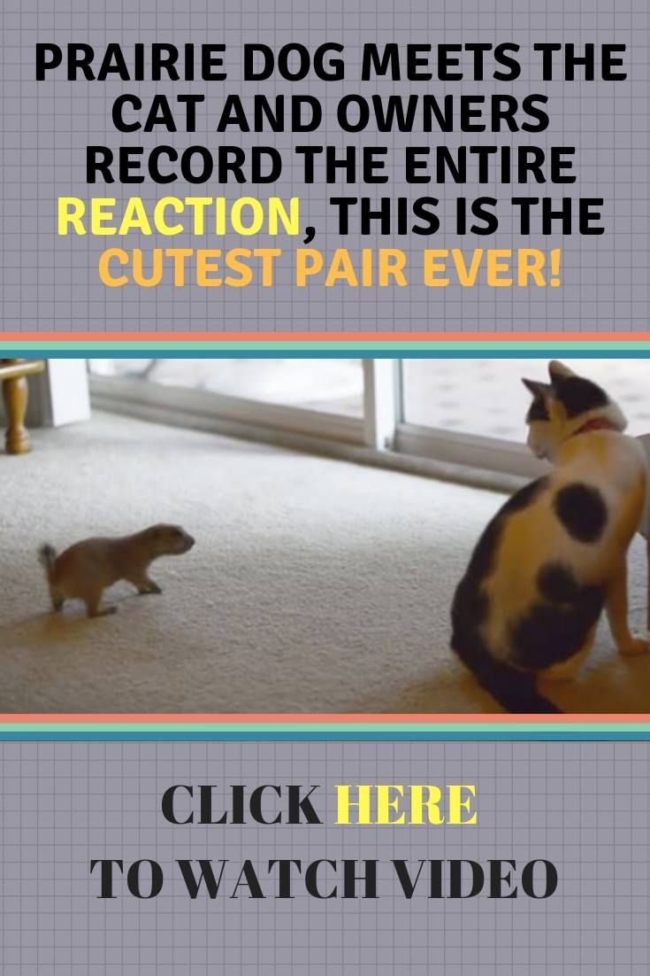 Funny Cat Kitten Dog Puppy Video Story Funny Animal Video Funny Dog Videos Dog Meet Cats And Kittens Funny Dog Videos