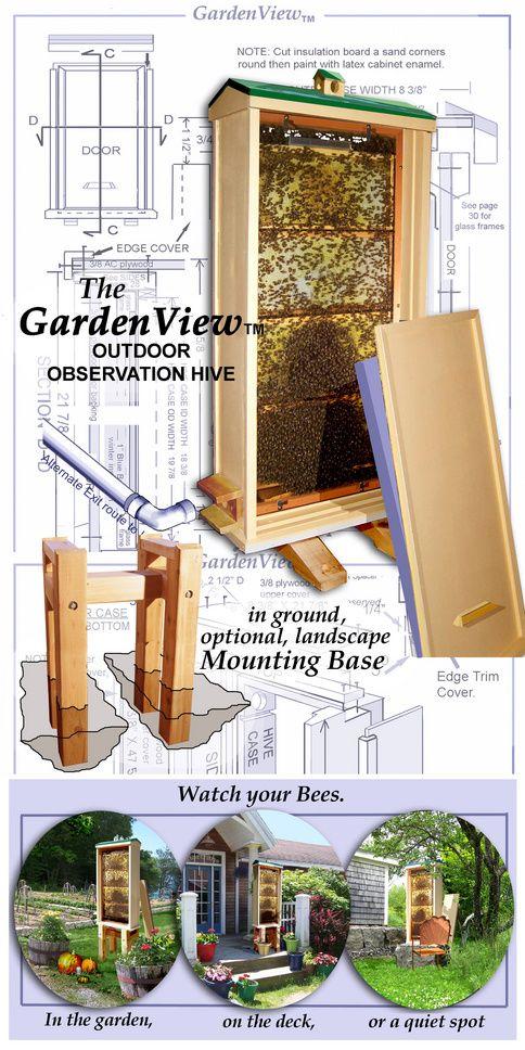 outdoor bee observation