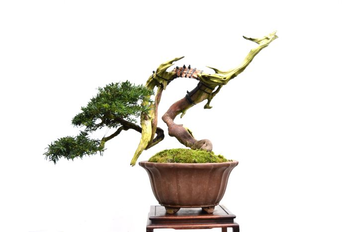 Buy Yamadori and Bonsai | Bonsai & Yamadori from Tony Tickle