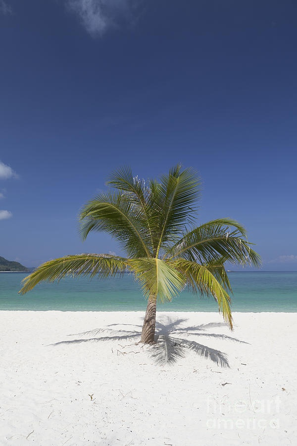 ✯ Palm tree on the beach at Ko Lipe island, part of the Tarutao national marine park, Thailand