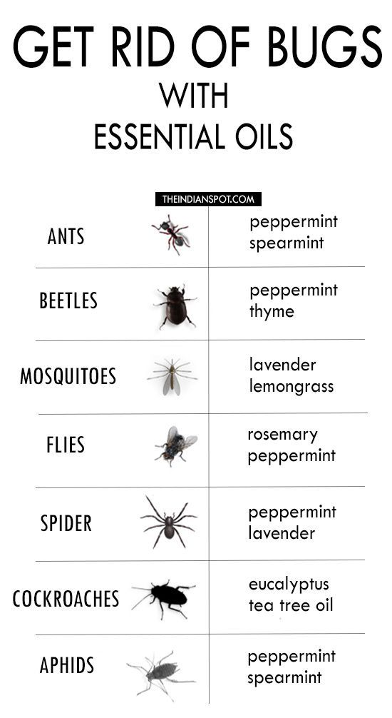 ESSENTIAL OILS TO GET RID OF BUGS                                                                                                                                                                                 More