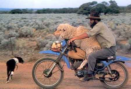 A man and a sheep on a motorcycle - The Weird Picture Archive