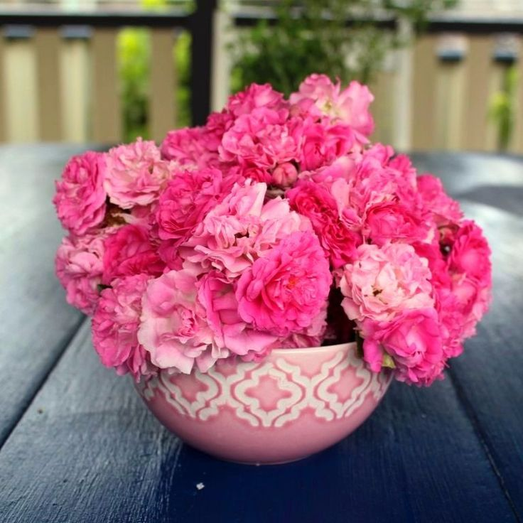 I can't get enough of the beautiful flowers in my garden this year.  I am even convincing myself that I have a green thumb.