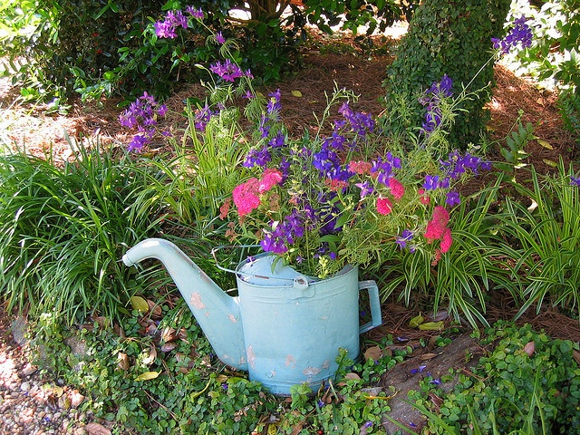 Top 30 ideas about Watering Can