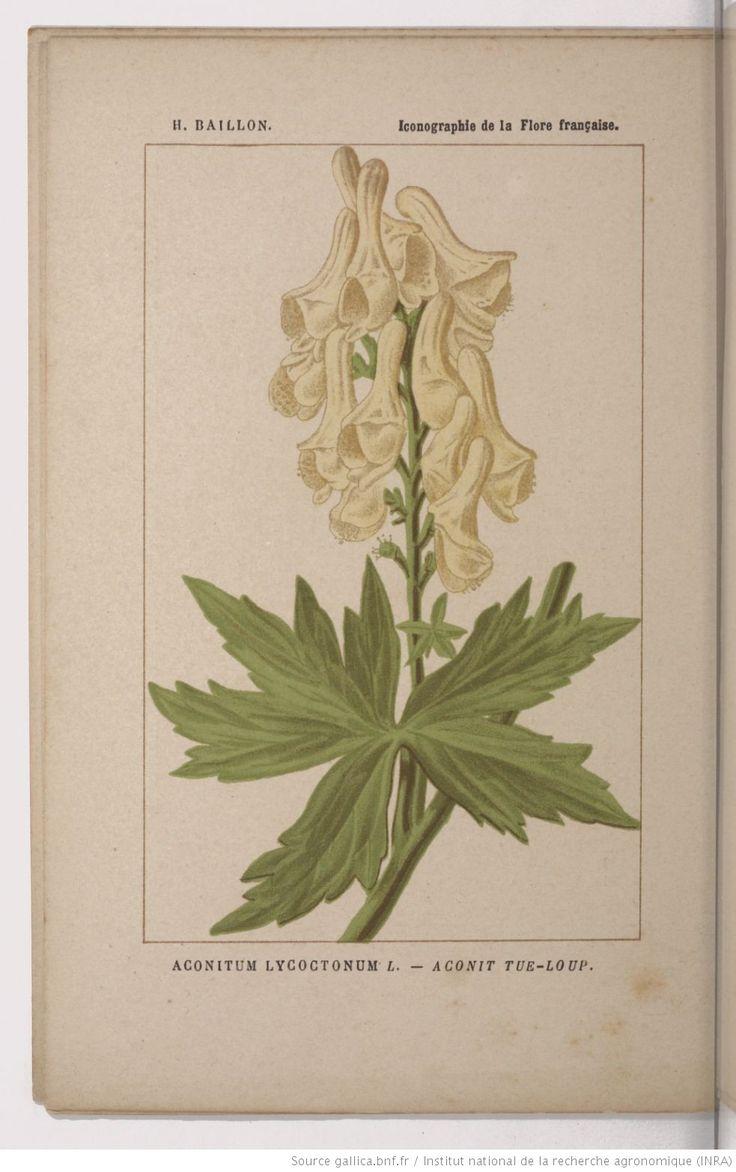 Aconit tue-loup, Iconographie de la flore française / par H. Baillon,... | 1885-1895