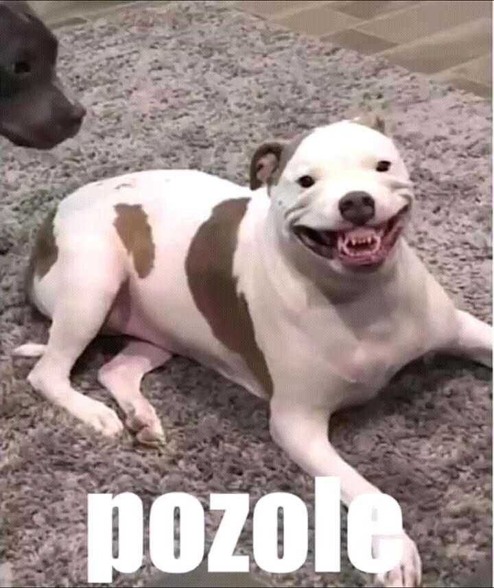 Pin De Adbuzcan En Humor Plantillas Xd Memes De Perros Chistosos Memes Divertidos Memes Perros