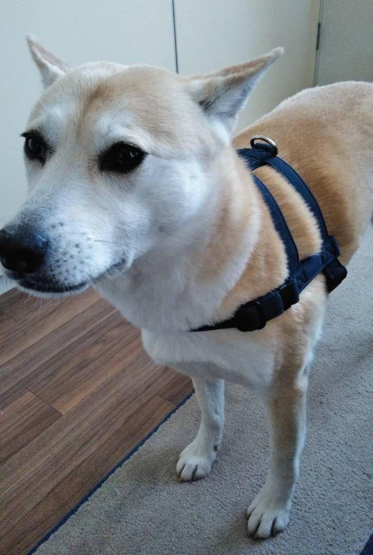 どんより気分を救ってくれる犬の散歩 保護犬マンガ Esseonline エッセ オンライン 犬 犬 散歩 雑種犬