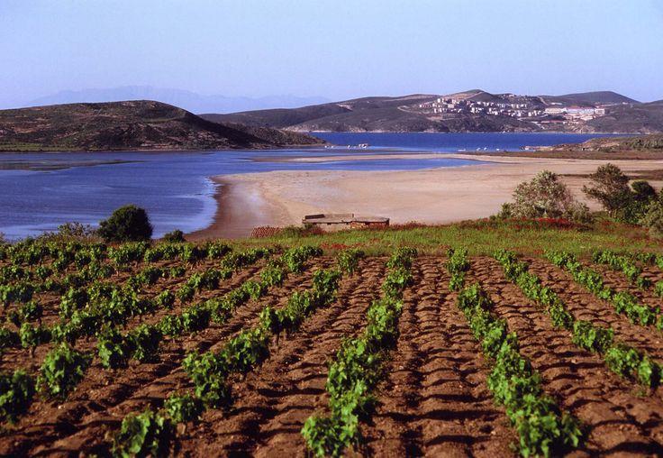 limnos vineyard