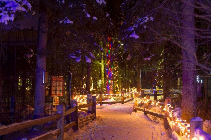 Zoo Lights tonight, Saturday and Sunday at The Alaska Zoo! 5-8pm, Dress in layers and stop by the Gift Shop, Coffee Shop and Discovery Center to keep warm. #AlaskaFunFriday #Travel #Zoo