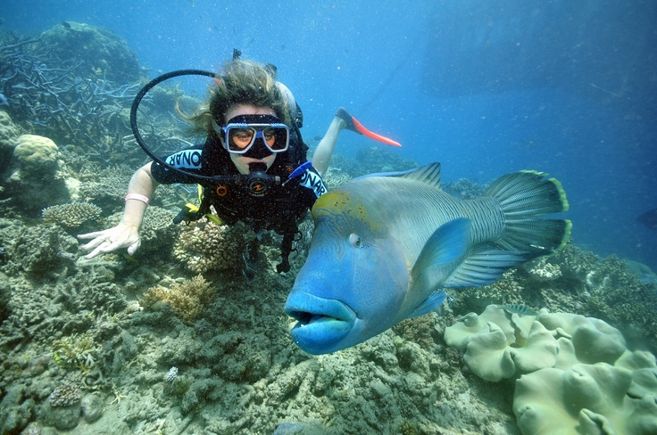 Nothing like diving with Wally on the Great Barrier Reef