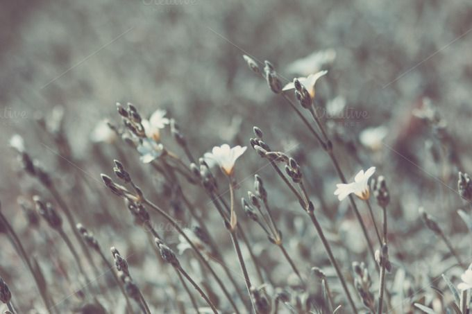 Silver Grass by Hombre-cz on @creativemarket