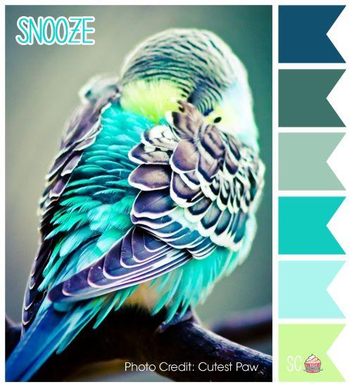Teal Blue Vs Teal Green Colors Comparison: Best 25+ Teal Color Palettes Ideas On Pinterest