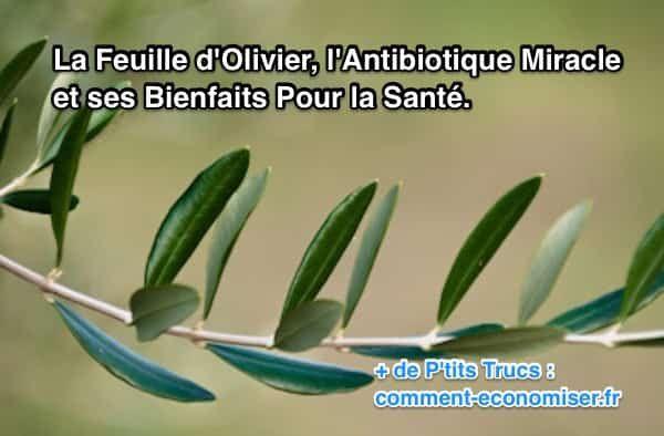 L'olivier est l'arbre méditerranéen par excellence. Aussi appelé Olea europaea folium, il est le symbole de paix et de fidélité. Cultivé depuis des millénaires (plus de 3 500 ans !) pour ses fruits et l'huile qu'on en extrait, il est aussi un antibiotique peu connu.  Découvrez l'astuce ici : http://www.comment-economiser.fr/la-feuille-d%E2%80%99olivier-est-un-antibiotique-miracle-meconnu.html?utm_content=buffer4e3ec&utm_medium=social&utm_source=pinterest.com&utm_campaign=buffer
