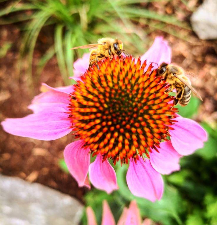 #natur #Garten #wunderschön #blumen #flower #fotografie