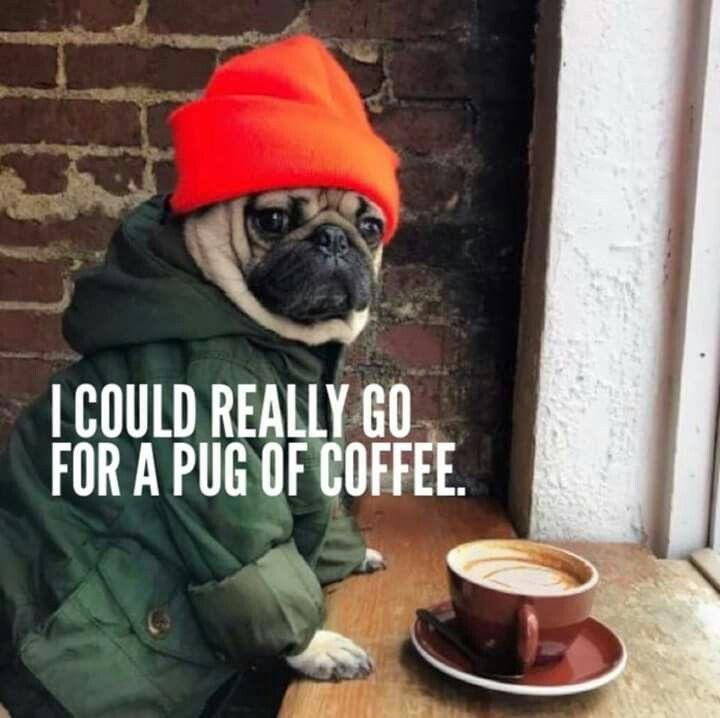 How Cute Pugs Funny Cute Pugs Pug Love