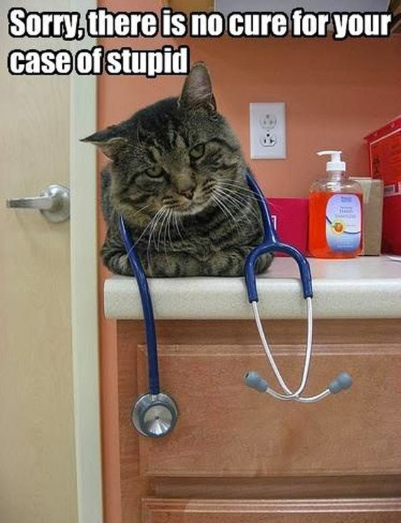 30 Really Hilarious Cat Pics