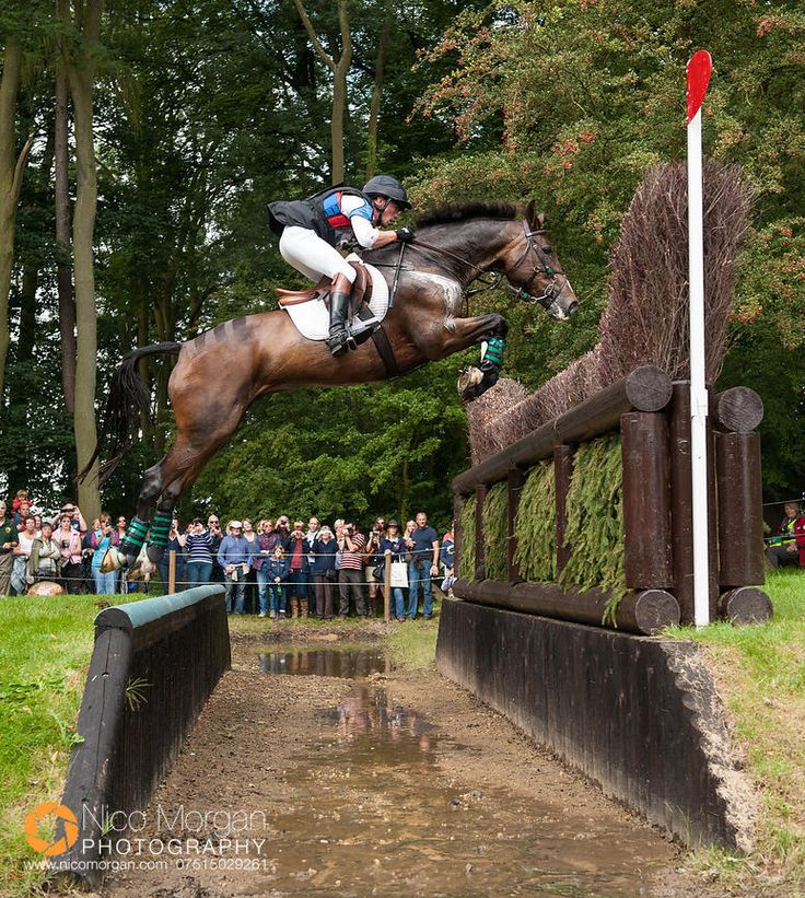 Horses jumping cross country - photo#41