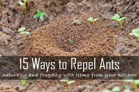 15 Ways to Repel Ants Naturally and Frugally. These ideas all use items from your kitchen to deter and make natural ant repellents. Make your own natural ant repellent with many recipe ideas.
