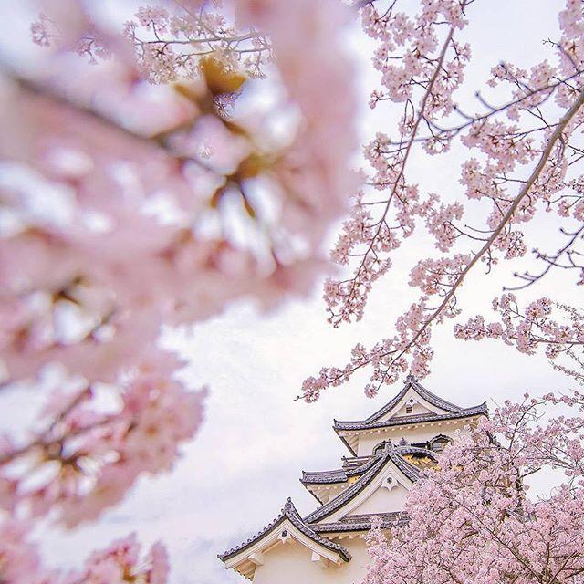 """""""Lokasi: Kastil Hikone, Shiga, Jepang . Prefektur Shiga yang terletak di wilayah Kansai ini merupakan prefektur yang kaya akan peninggalan sejarah Jepang. Bagi pecinta sejarah, tak lengkap rasanya jika tidak singgah ke prefektur yang sempat menjadi ibu kota Jepang dan menilik sejarah Jepang dari 'sisi lain' yang tidak dapat minna temukan di Kyoto ataupun di Nara. Salah satu spot sejarah yang wajib minna kunjungi adalah Kastil Hikone yang dibangun pada zaman Edo. Dari kastil ini minna bisa…"""